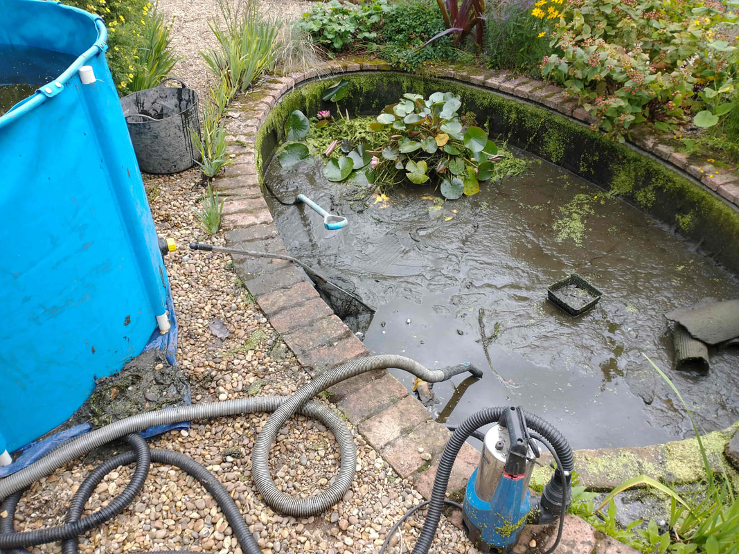 Pond Cleaning Services East Anglia