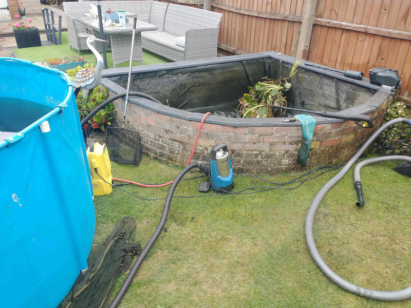 Pond Cleaner in Norwich